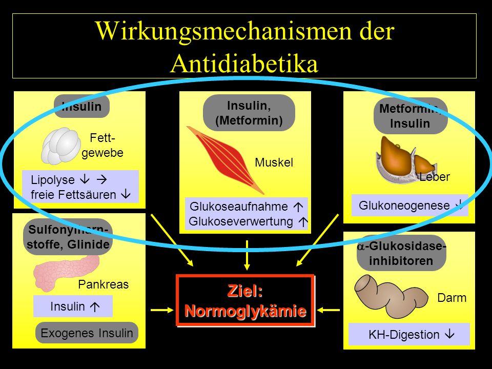 Wirkungsmechanismen der Antidiabetika Ziel:NormoglykämieZiel:Normoglykämie Insulin, (Metformin) Glukoseaufnahme Glukoseverwertung Muskel Metformin, Insulin Glukoneogenese Leber Sulfonylharn- stoffe, Glinide Insulin Pankreas Exogenes Insulin -Glukosidase- inhibitoren KH-Digestion Darm I/007 Lipolyse freie Fettsäuren Insulin Fett- gewebe