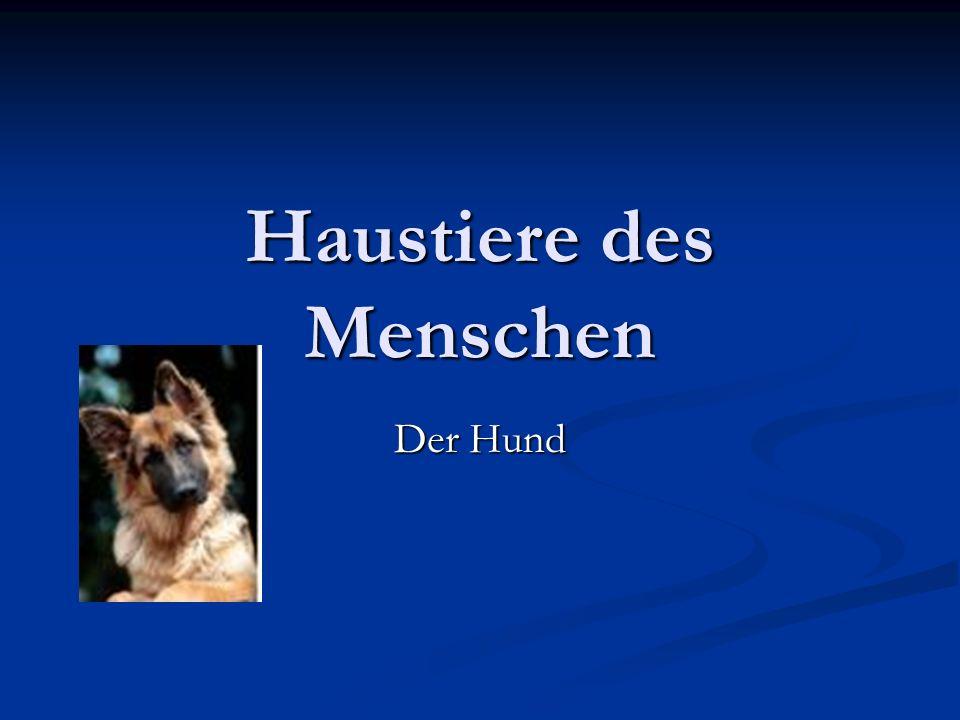Haustiere des Menschen Der Hund