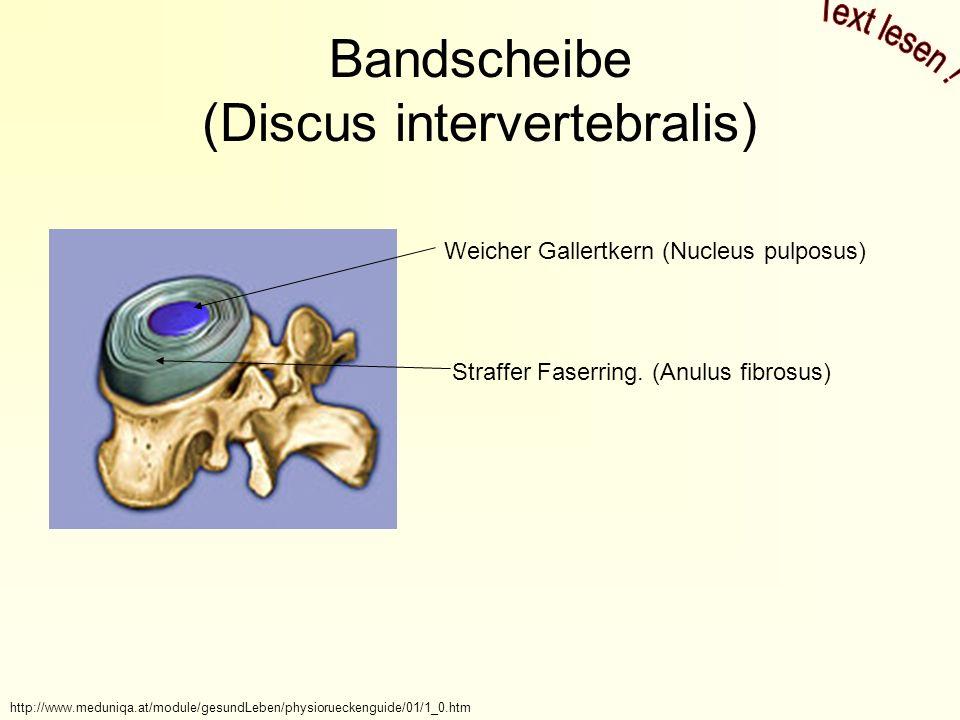 Bandscheibe (Discus intervertebralis) http://www.meduniqa.at/module/gesundLeben/physiorueckenguide/01/1_0.htm Weicher Gallertkern (Nucleus pulposus) Straffer Faserring.