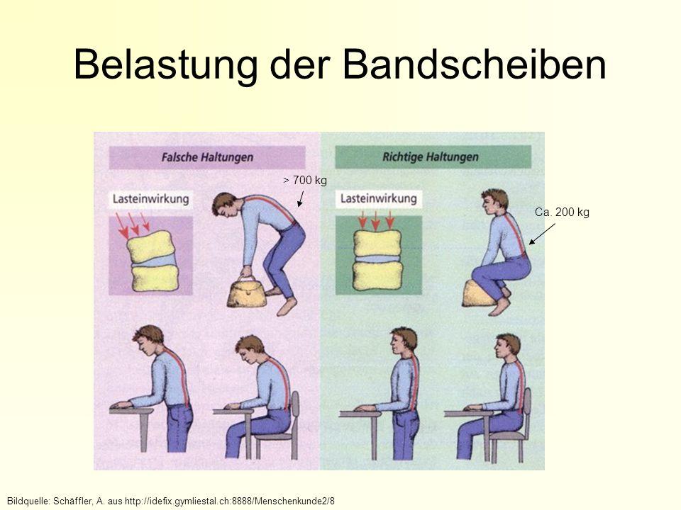 Belastung der Bandscheiben > 700 kg Ca.200 kg Bildquelle: Schäffler, A.