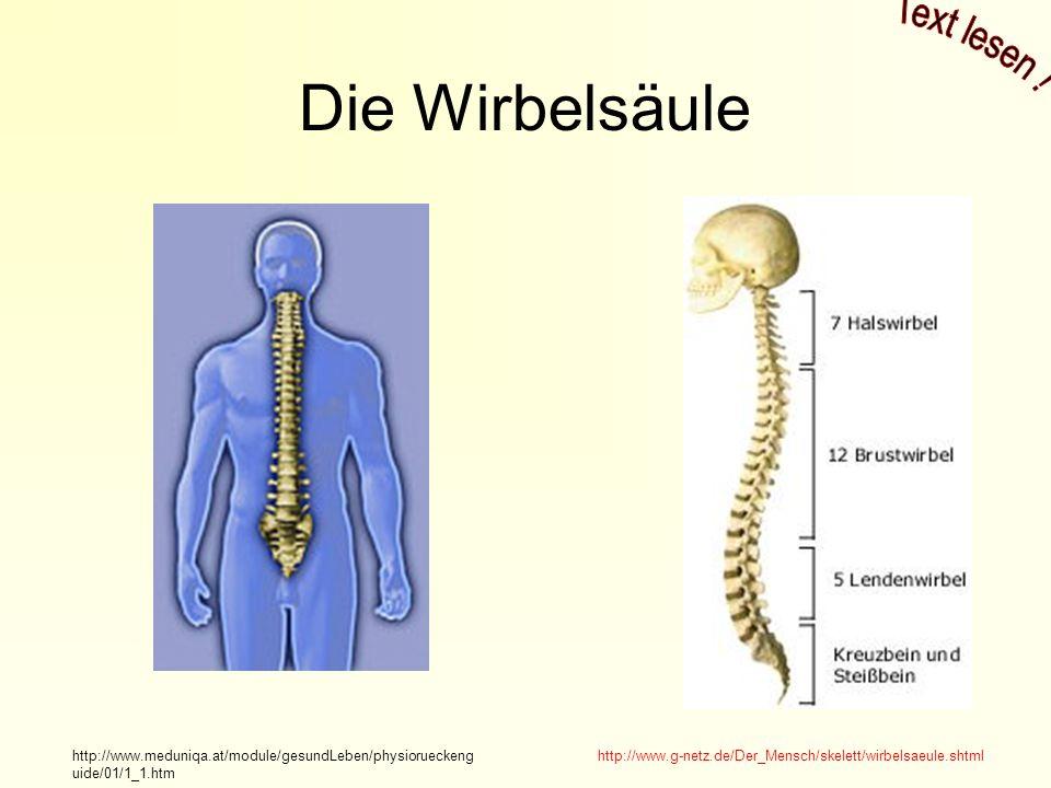 Die Wirbelsäule http://www.g-netz.de/Der_Mensch/skelett/wirbelsaeule.shtmlhttp://www.meduniqa.at/module/gesundLeben/physiorueckeng uide/01/1_1.htm