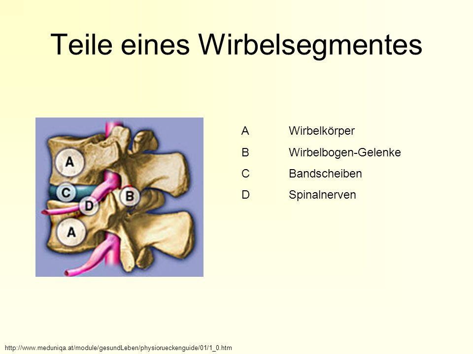 Teile eines Wirbelsegmentes AWirbelkörper BWirbelbogen-Gelenke CBandscheiben DSpinalnerven http://www.meduniqa.at/module/gesundLeben/physiorueckenguide/01/1_0.htm