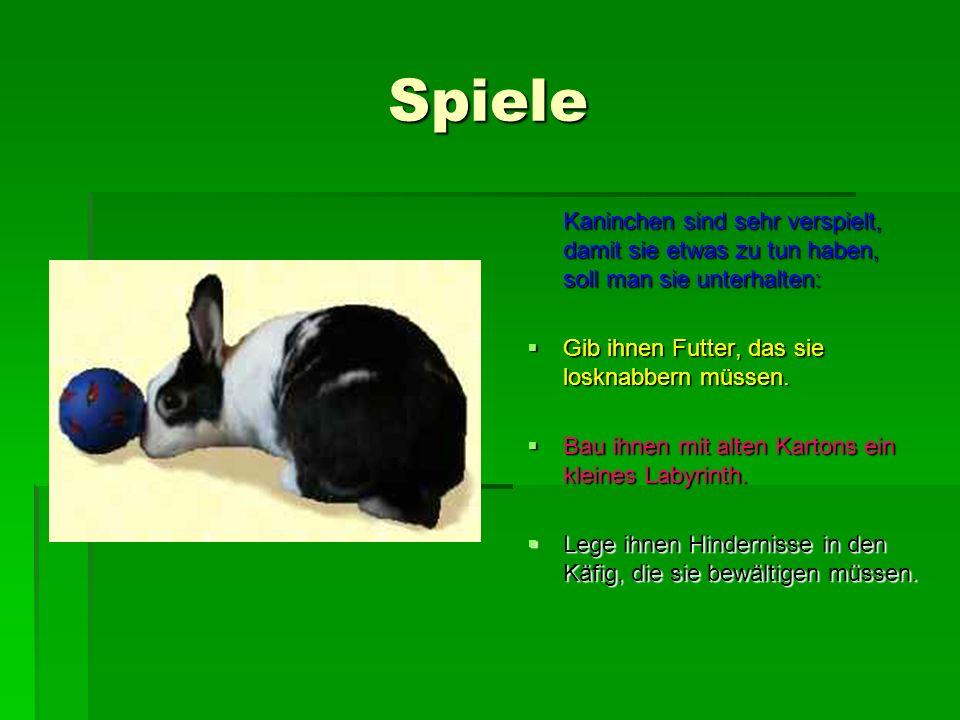 Spiele Kaninchen sind sehr verspielt, damit sie etwas zu tun haben, soll man sie unterhalten: Gib ihnen Futter, das sie losknabbern müssen.