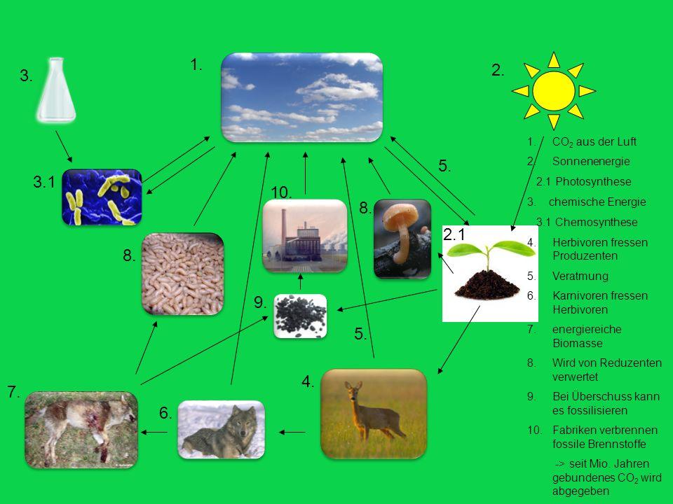 1.CO 2 aus der Luft 2.Sonnenenergie 2.1 Photosynthese 3. chemische Energie 3.1 Chemosynthese 4.Herbivoren fressen Produzenten 5.Veratmung 6.Karnivoren