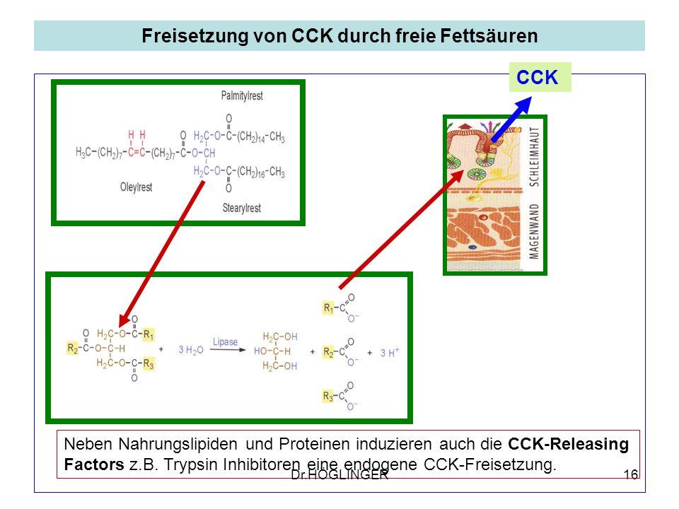 16 Freisetzung von CCK durch freie Fettsäuren CCK Neben Nahrungslipiden und Proteinen induzieren auch die CCK-Releasing Factors z.B.