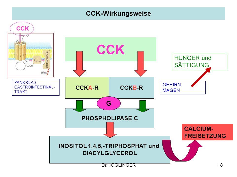 18 CCK-Wirkungsweise CCKA-RCCKB-R CCK PHOSPHOLIPASE C INOSITOL 1,4,5,-TRIPHOSPHAT und DIACYLGLYCEROL CALCIUM- FREISETZUNG PANKREAS GASTROINTESTINAL- TRAKT GEHIRN MAGEN G HUNGER und SÄTTIGUNG CCK Dr.HÖGLINGER