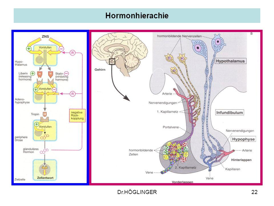 22 Hormonhierachie Dr.HÖGLINGER
