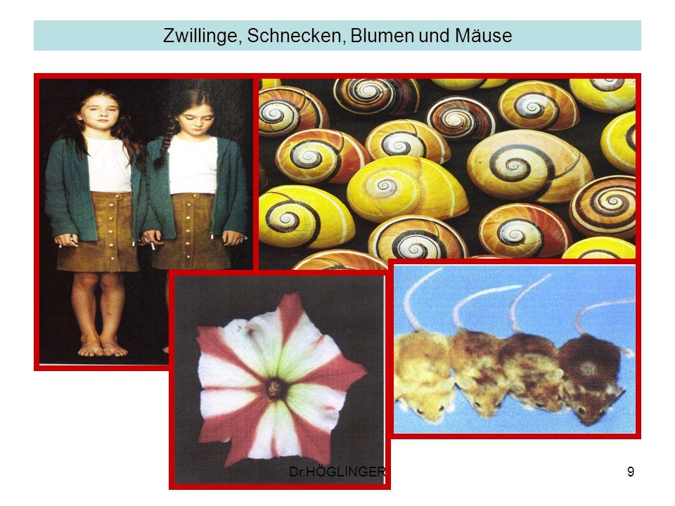 9 Zwillinge, Schnecken, Blumen und Mäuse Dr.HÖGLINGER