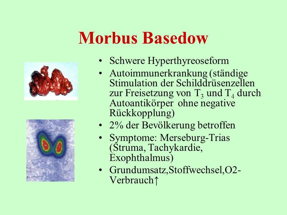 Morbus Basedow Schwere Hyperthyreoseform Autoimmunerkrankung (ständige Stimulation der Schilddrüsenzellen zur Freisetzung von T 3 und T 4 durch Autoan