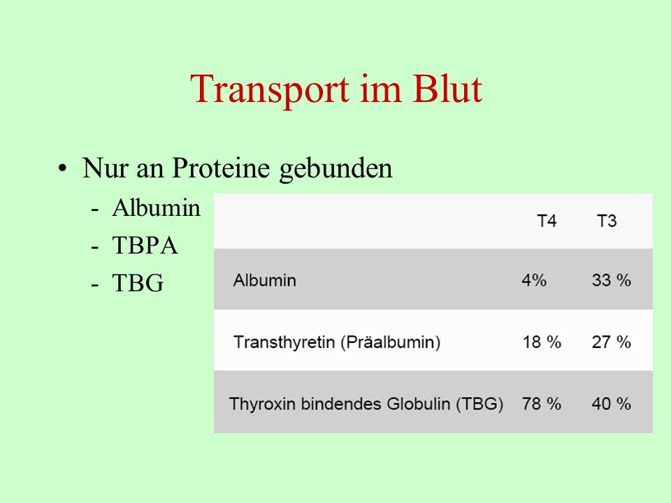 Transport im Blut Nur an Proteine gebunden -Albumin -TBPA -TBG