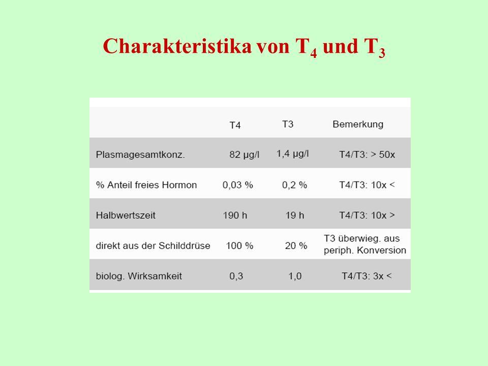 Charakteristika von T 4 und T 3