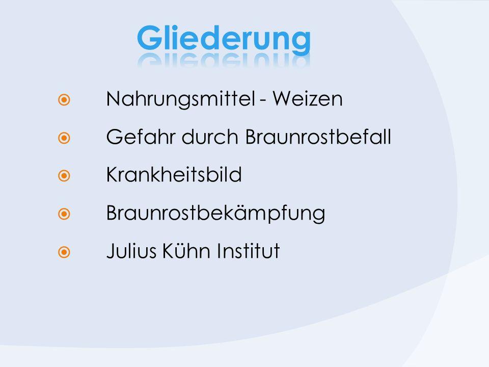 Nahrungsmittel - Weizen Gefahr durch Braunrostbefall Krankheitsbild Braunrostbekämpfung Julius Kühn Institut