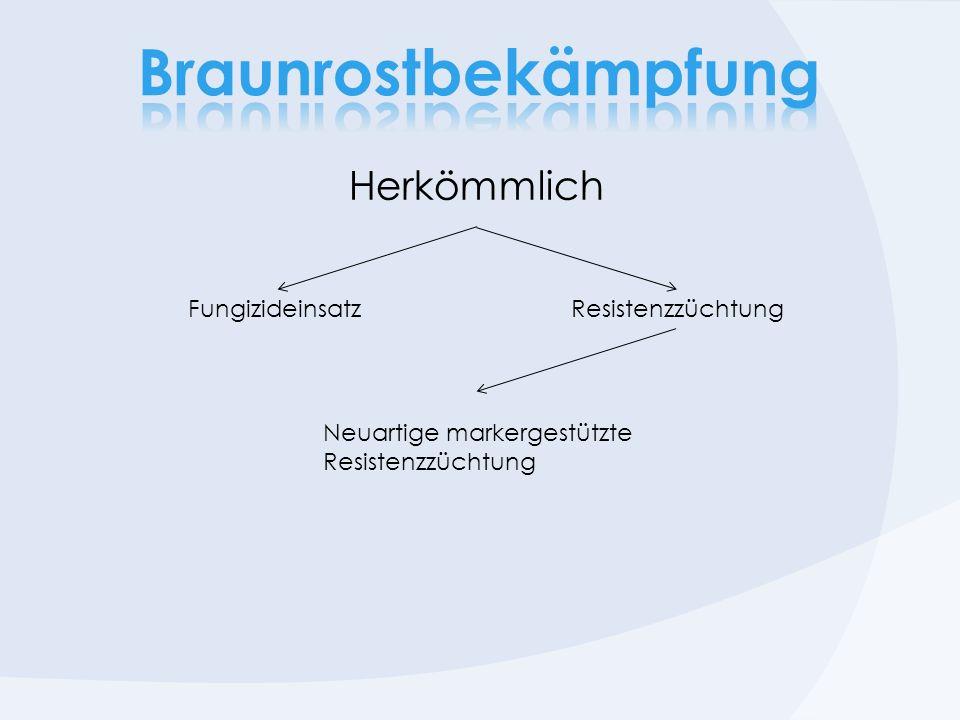 Herkömmlich FungizideinsatzResistenzzüchtung Neuartige markergestützte Resistenzzüchtung