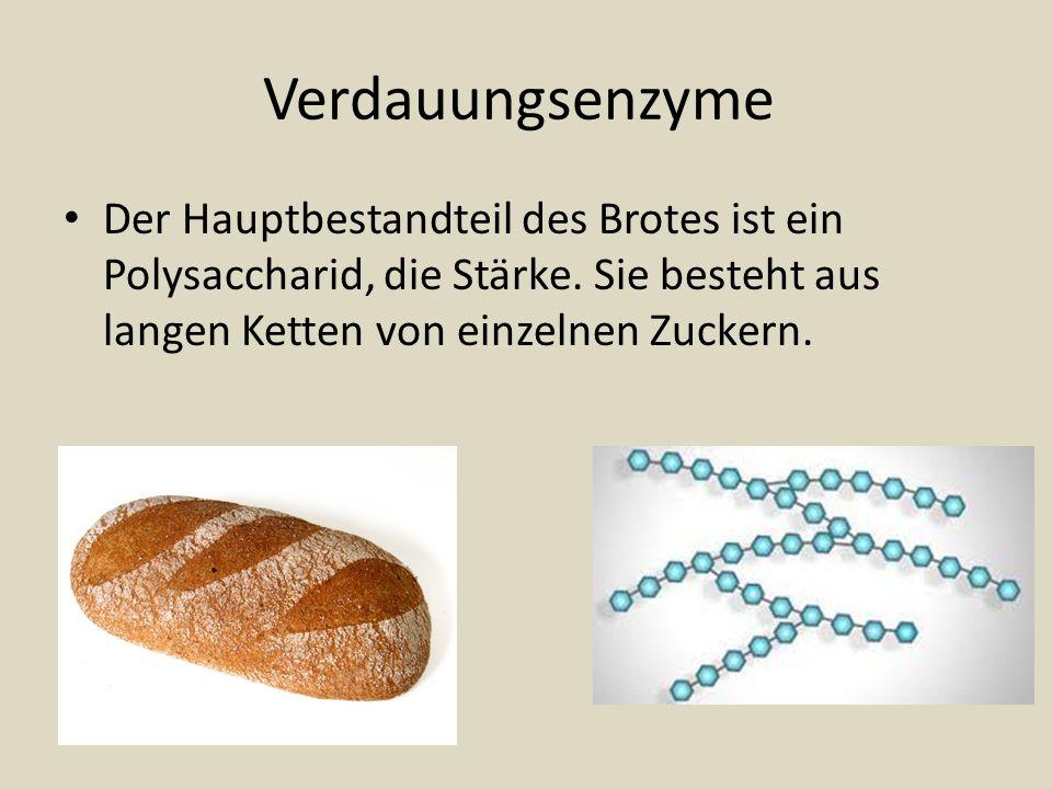 Verdauungsenzyme Der Hauptbestandteil des Brotes ist ein Polysaccharid, die Stärke. Sie besteht aus langen Ketten von einzelnen Zuckern.