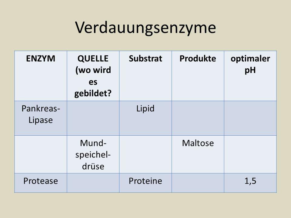 Verdauungsenzyme ENZYMQUELLE (wo wird es gebildet? SubstratProdukteoptimaler pH Pankreas- Lipase Lipid Mund- speichel- drüse Maltose ProteaseProteine1