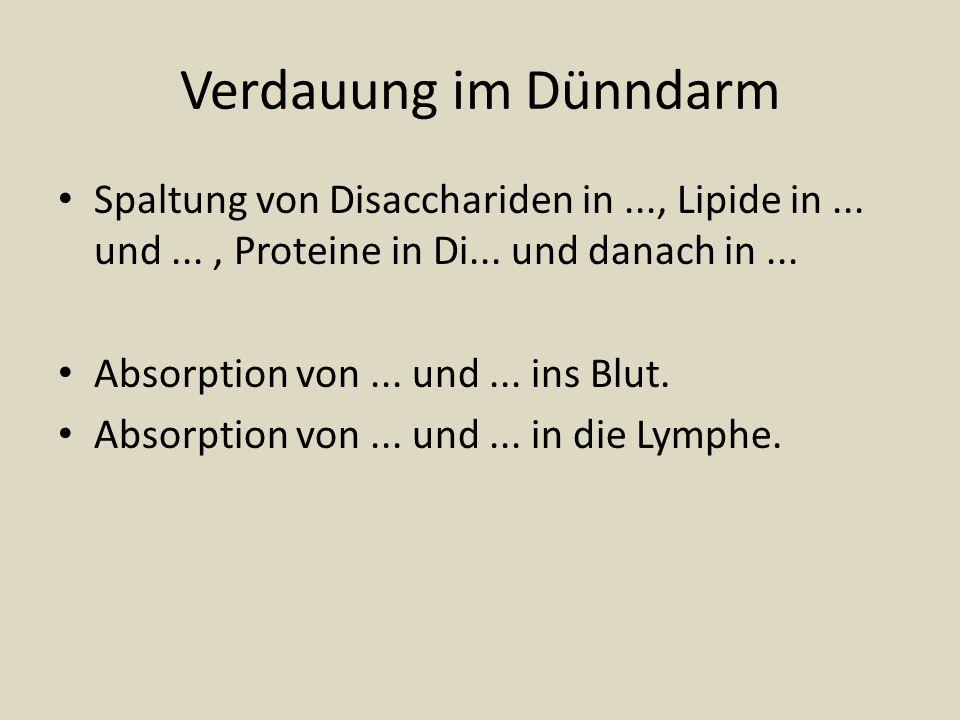 Verdauung im Dünndarm Spaltung von Disacchariden in..., Lipide in... und..., Proteine in Di... und danach in... Absorption von... und... ins Blut. Abs