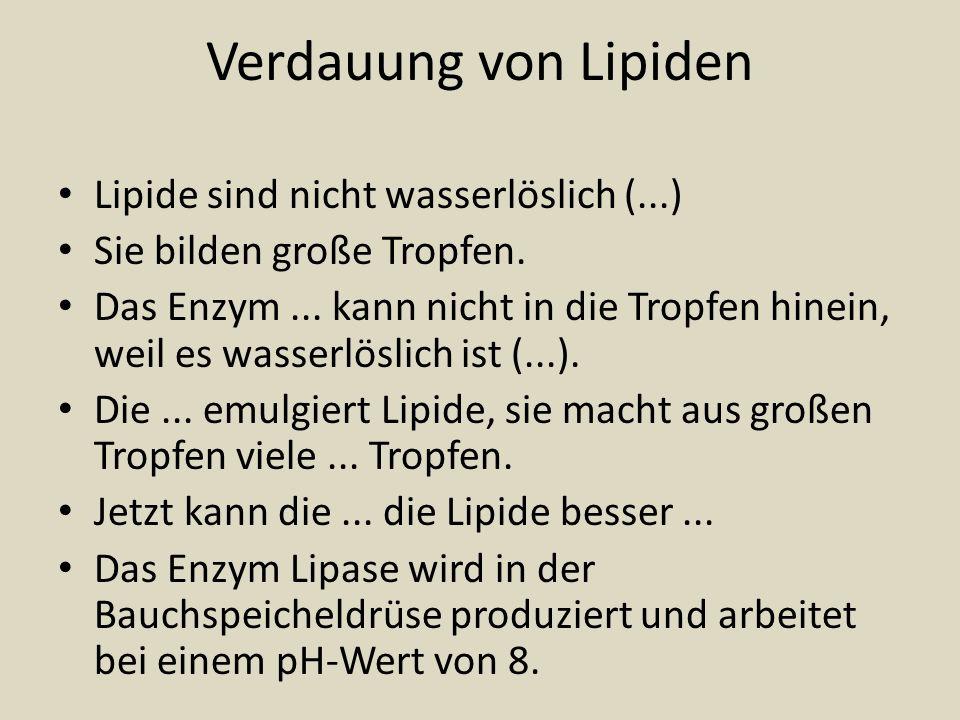 Verdauung von Lipiden Lipide sind nicht wasserlöslich (...) Sie bilden große Tropfen. Das Enzym... kann nicht in die Tropfen hinein, weil es wasserlös