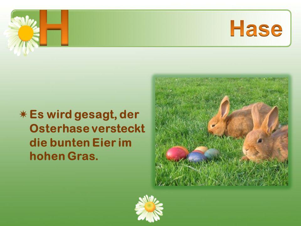 Es wird gesagt, der Osterhase versteckt die bunten Eier im hohen Gras.