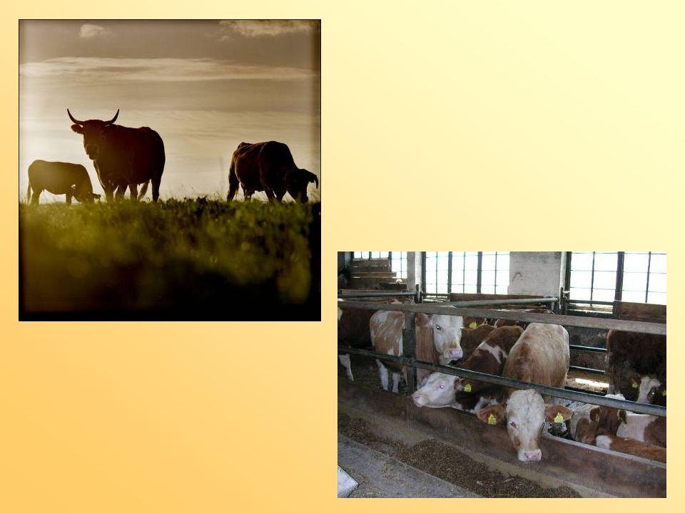 Projekt mit der VS Mathon Was sind VegetarierInnen bzw.