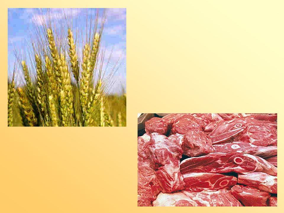 Die Idee und mein Ziel Persönlicher Bezug Fleischlose Kost – so ein Körnerfutter.