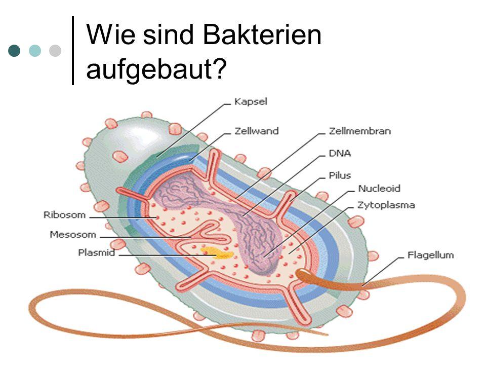 Wie sind Bakterien aufgebaut?