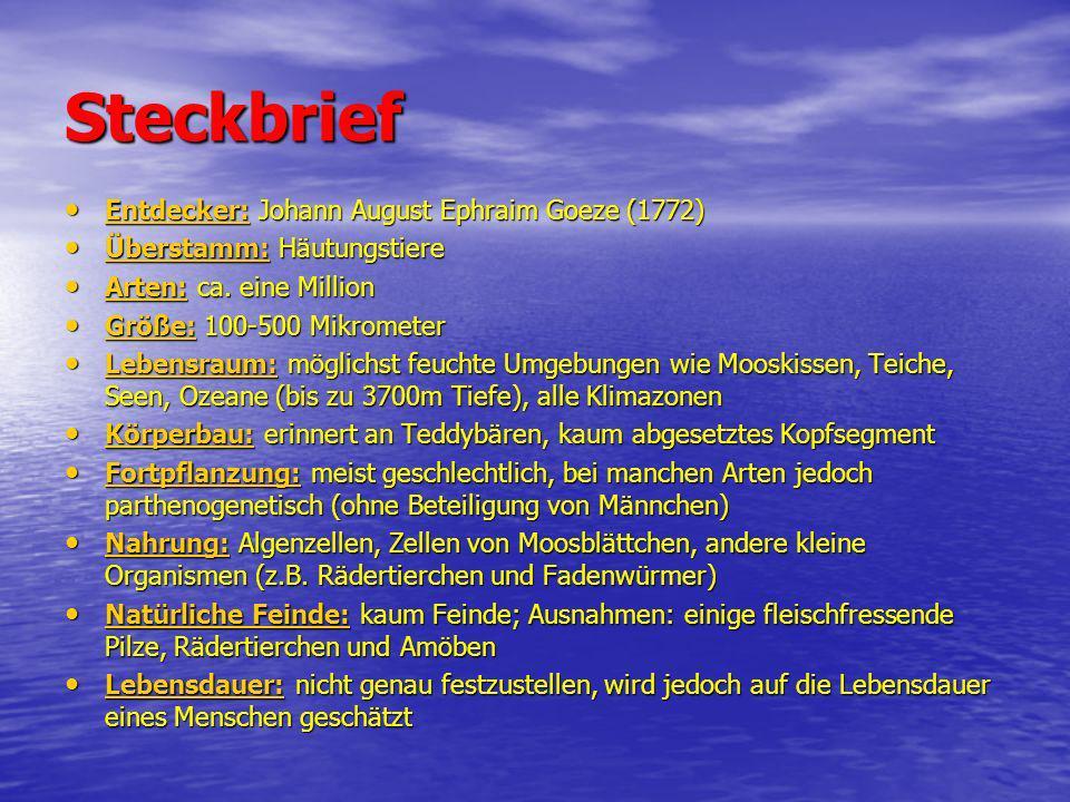 Steckbrief Entdecker: Johann August Ephraim Goeze (1772) Entdecker: Johann August Ephraim Goeze (1772) Überstamm: Häutungstiere Überstamm: Häutungstie