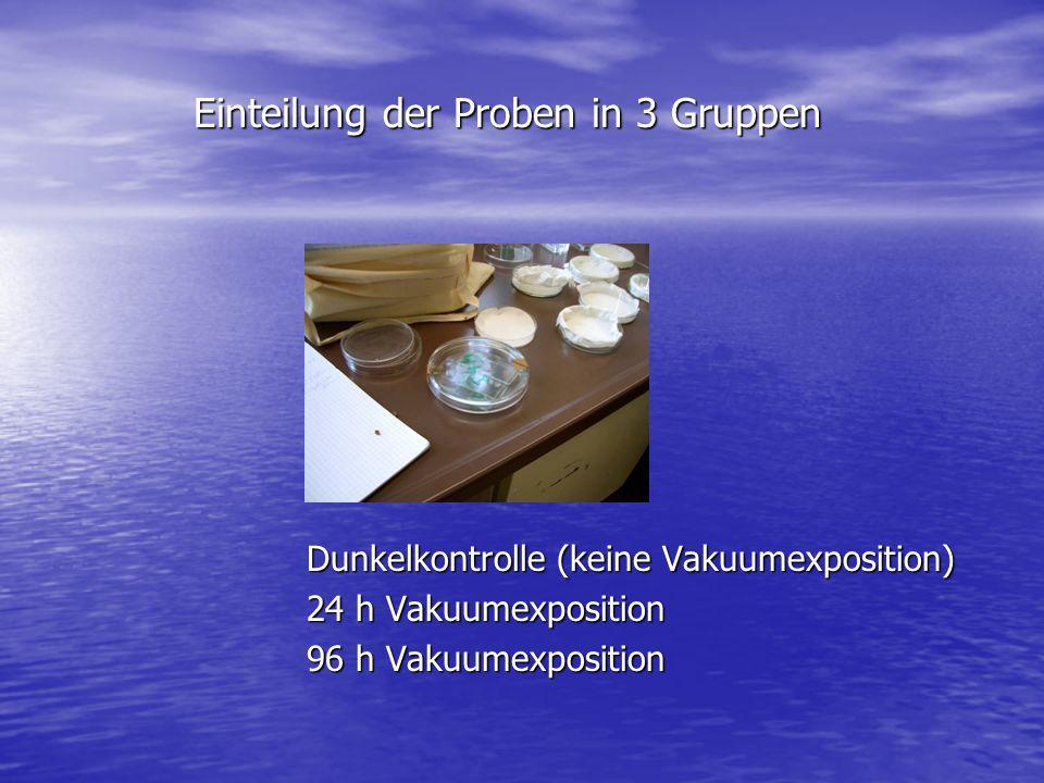 Einteilung der Proben in 3 Gruppen Einteilung der Proben in 3 Gruppen Dunkelkontrolle (keine Vakuumexposition) 24 h Vakuumexposition 96 h Vakuumexposi