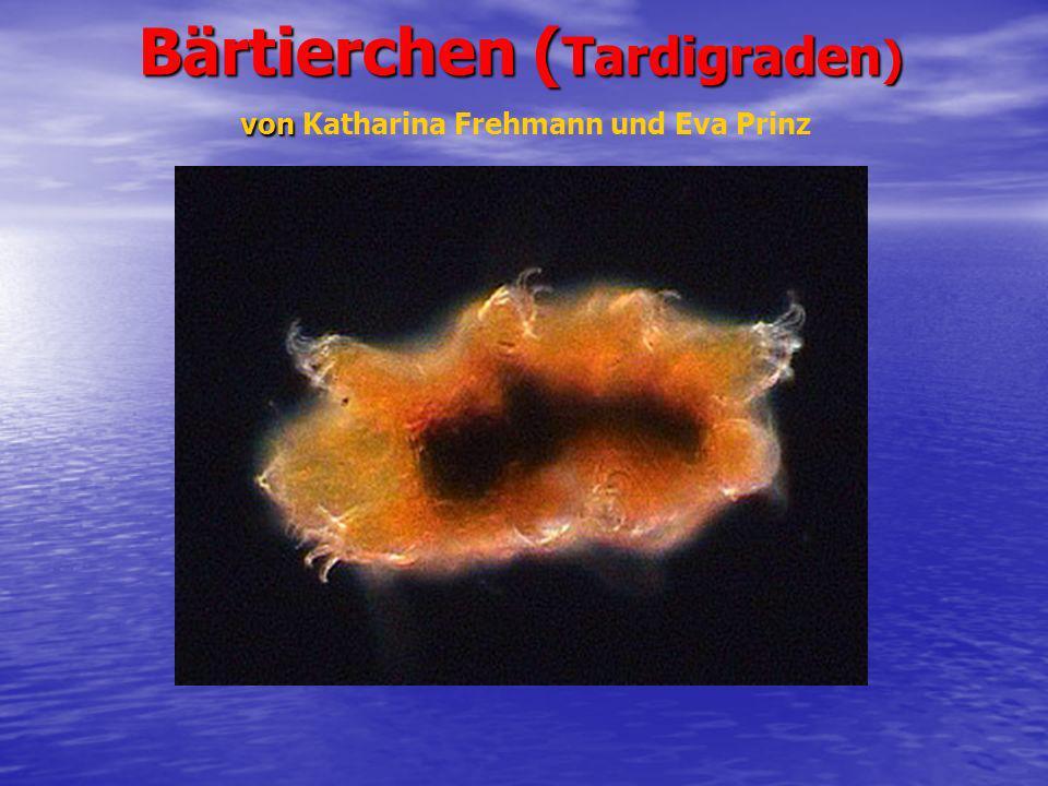 Bärtierchen ( Tardigraden ) von Bärtierchen ( Tardigraden ) von Katharina Frehmann und Eva Prinz