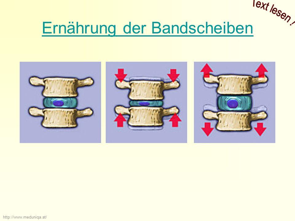 Ernährung der Bandscheiben http://www.meduniqa.at/