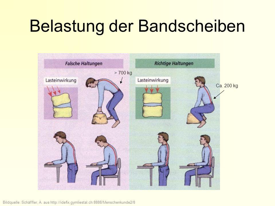 Belastung der Bandscheiben > 700 kg Ca. 200 kg Bildquelle: Schäffler, A. aus http://idefix.gymliestal.ch:8888/Menschenkunde2/8