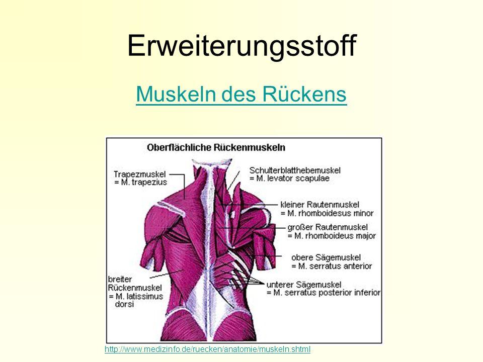Erweiterungsstoff Muskeln des Rückens http://www.medizinfo.de/ruecken/anatomie/muskeln.shtml