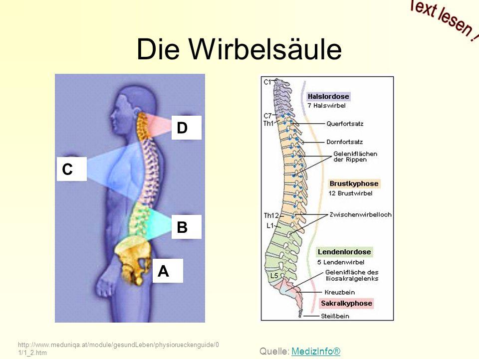 Die Wirbelsäule http://www.meduniqa.at/module/gesundLeben/physiorueckenguide/0 1/1_2.htm D C B A Quelle: MedizInfo®MedizInfo®