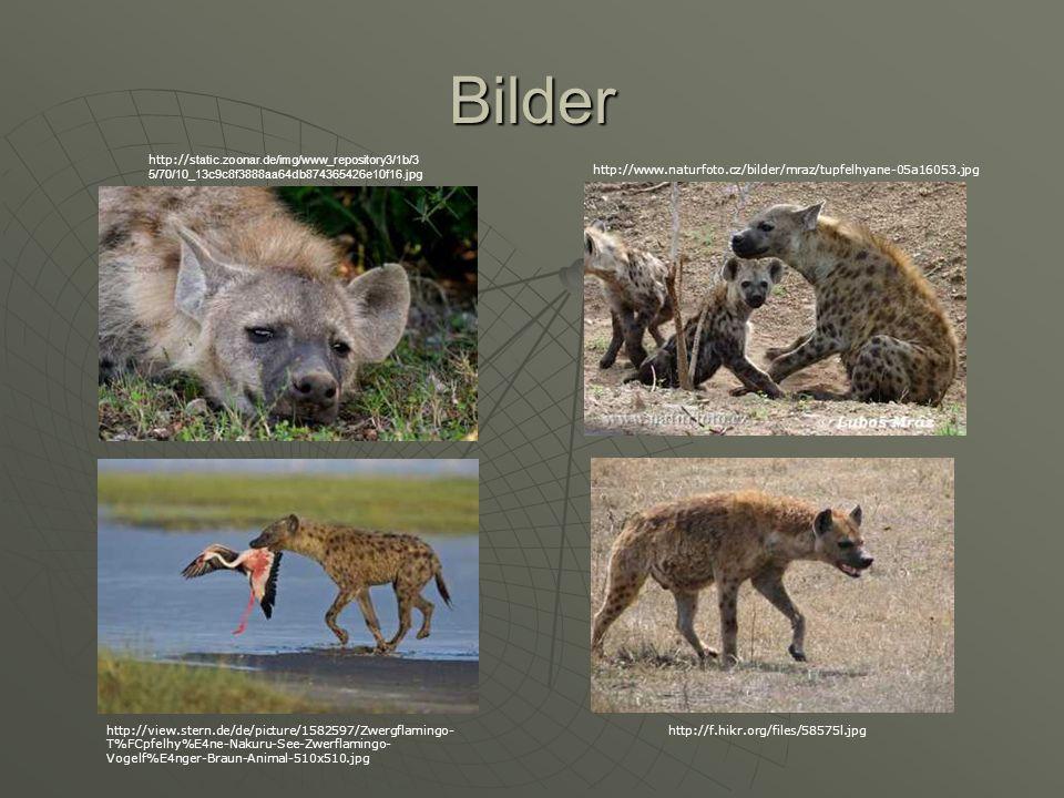 Bilder http:// static.zoonar.de/img/www_repository3/1b/3 5/70/10_13c9c8f3888aa64db874365426e10f16.jpg http://www.naturfoto.cz/bilder/mraz/tupfelhyane-