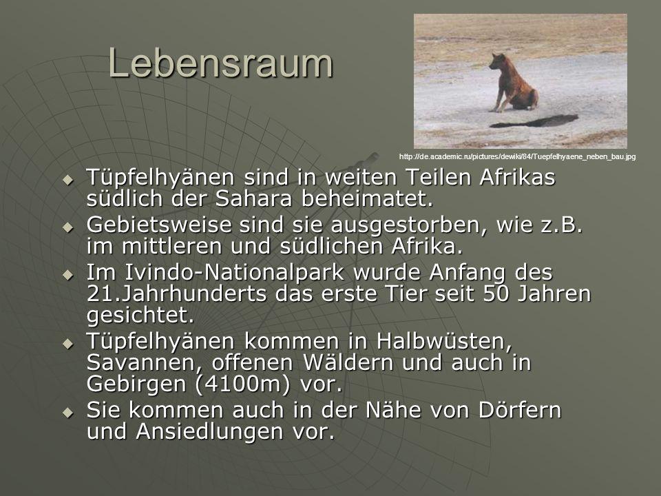 Lebensraum Tüpfelhyänen sind in weiten Teilen Afrikas südlich der Sahara beheimatet. Tüpfelhyänen sind in weiten Teilen Afrikas südlich der Sahara beh