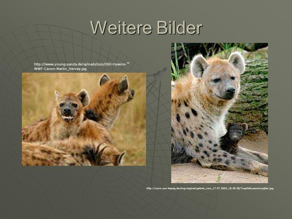 Weitere Bilder http://www.young-panda.de/uploads/pics/260-Hyaene- - WWF-Canon-Martin_Harvey.jpg http://www.zoo-leipzig.de/img/original/galerie_vom_17.