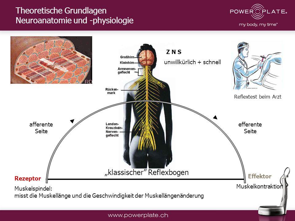 Copyright Power Plate Deutschland klassischer Reflexbogen afferente Seite efferente Seite Z N S Rezeptor Muskelspindel: misst die Muskellänge und die Geschwindigkeit der Muskellängenänderung Effektor Muskelkontraktion unwillkürlich + schnell Theoretische Grundlagen Neuroanatomie und -physiologie Reflextest beim Arzt