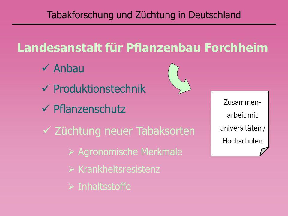 Tabakforschung und Züchtung in Deutschland Zusammen- arbeit mit Universitäten / Hochschulen Landesanstalt für Pflanzenbau Forchheim Anbau Produktionst