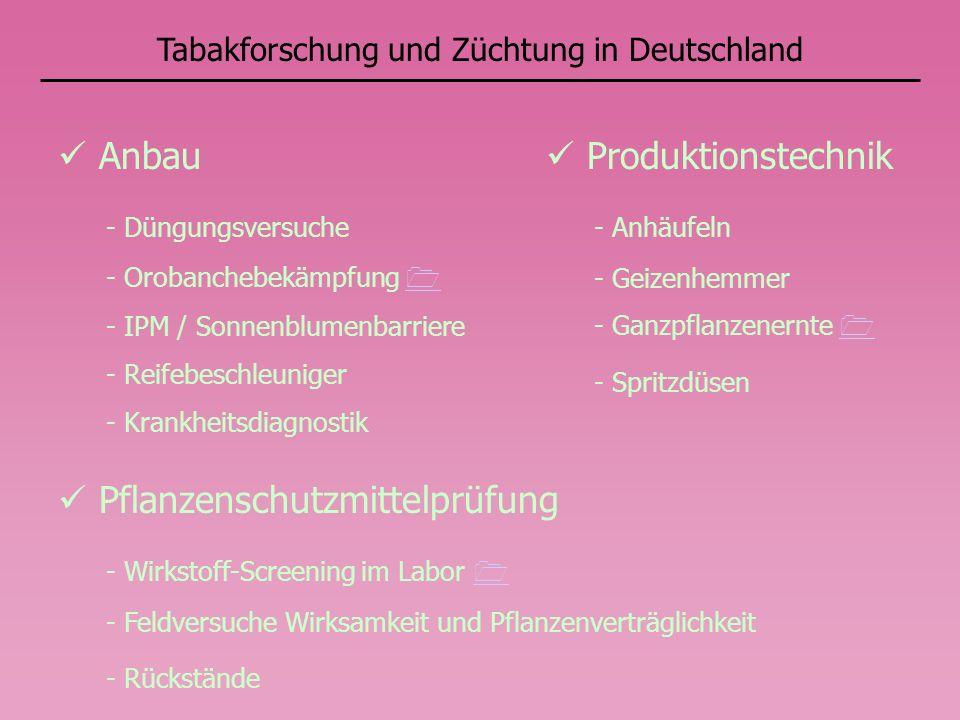 Tabakforschung und Züchtung in Deutschland Anbau - Düngungsversuche - Orobanchebekämpfung - IPM / Sonnenblumenbarriere - Reifebeschleuniger - Krankheitsdiagnostik Produktionstechnik - Anhäufeln - Geizenhemmer - Ganzpflanzenernte - Spritzdüsen Pflanzenschutzmittelprüfung - Wirkstoff-Screening im Labor - Feldversuche Wirksamkeit und Pflanzenverträglichkeit - Rückstände