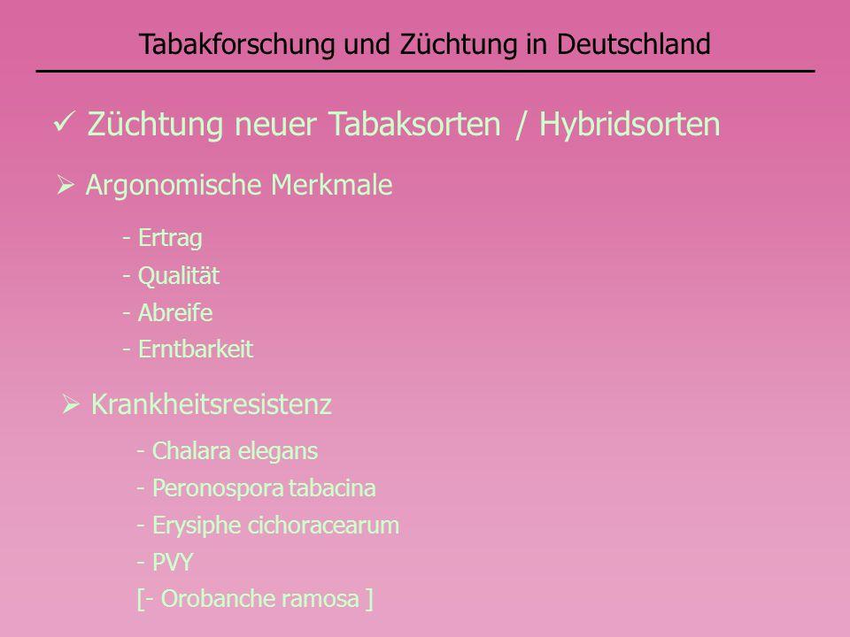 Züchtung neuer Tabaksorten / Hybridsorten Krankheitsresistenz - Chalara elegans - Peronospora tabacina - Erysiphe cichoracearum - PVY [- Orobanche ram
