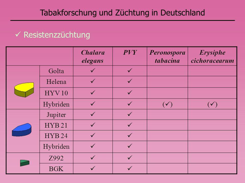 Tabakforschung und Züchtung in Deutschland Resistenzzüchtung Chalara elegans PVYPeronospora tabacina Erysiphe cichoracearum Golta Helena HYV 10 Hybriden ( ) Jupiter HYB 21 HYB 24 Hybriden Z992 BGK