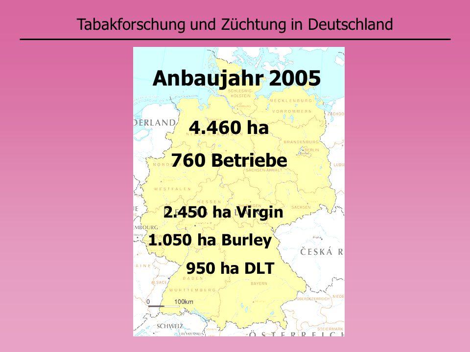 Anbaujahr 2005 4.460 ha 760 Betriebe Tabakforschung und Züchtung in Deutschland 2.450 ha Virgin 1.050 ha Burley 950 ha DLT