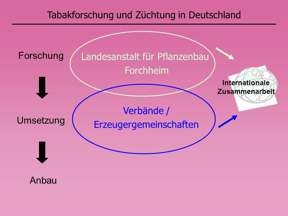 Tabakforschung und Züchtung in Deutschland Internationale Zusammenarbeit Forschung Umsetzung Anbau Landesanstalt für Pflanzenbau Forchheim Verbände / Erzeugergemeinschaften