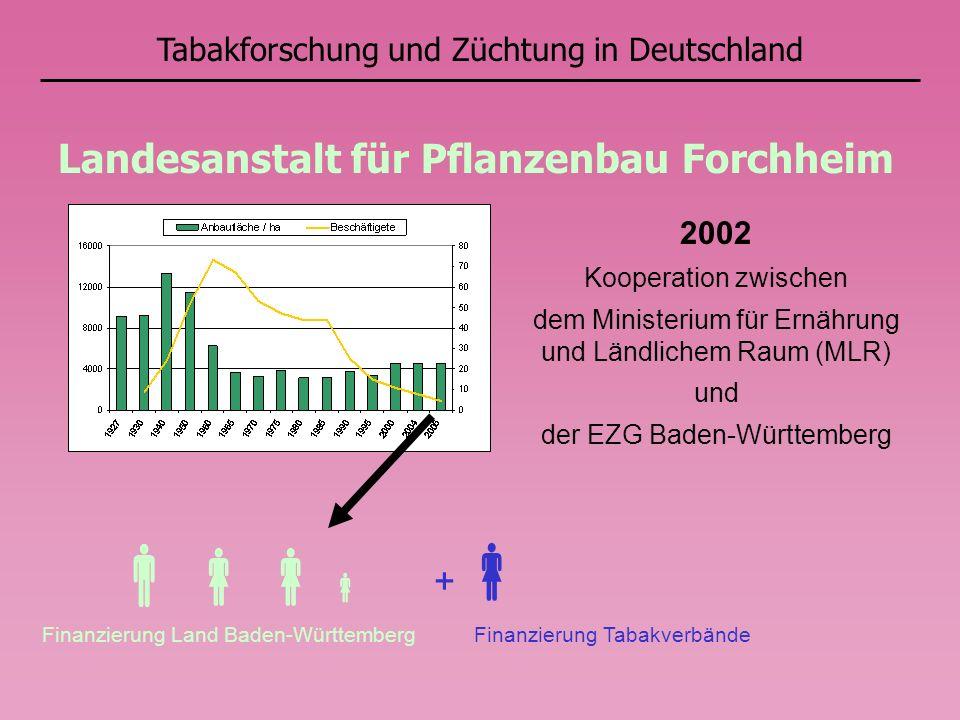 Tabakforschung und Züchtung in Deutschland Landesanstalt für Pflanzenbau Forchheim Finanzierung Land Baden-Württemberg + Finanzierung Tabakverbände 20