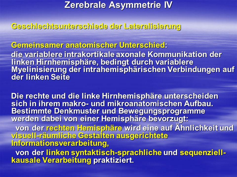 Zerebrale Asymmetrie IV Geschlechtsunterschiede der Lateralisierung Geschlechtsunterschiede der Lateralisierung Gemeinsamer anatomischer Unterschied: