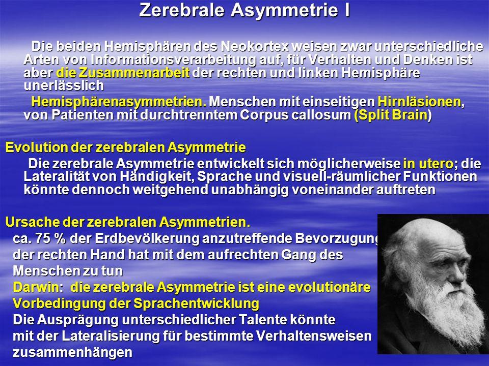 Zerebrale Asymmetrie II Zerebrale Asymmetrie II Analoge und sequentielle Verarbeitung Die beiden Hemisphären des Neokortex weisen zwar unterschiedliche Arten von Informationsverarbeitung auf, für Verhalten und Denken ist aber die Zusammenarbeit der rechten und linken Hemisphäre unerlässlich Die beiden Hemisphären des Neokortex weisen zwar unterschiedliche Arten von Informationsverarbeitung auf, für Verhalten und Denken ist aber die Zusammenarbeit der rechten und linken Hemisphäre unerlässlich Dynamische Knotenpunkte.