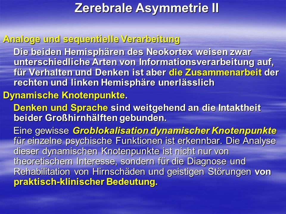 Zerebrale Asymmetrie II Zerebrale Asymmetrie II Analoge und sequentielle Verarbeitung Die beiden Hemisphären des Neokortex weisen zwar unterschiedlich