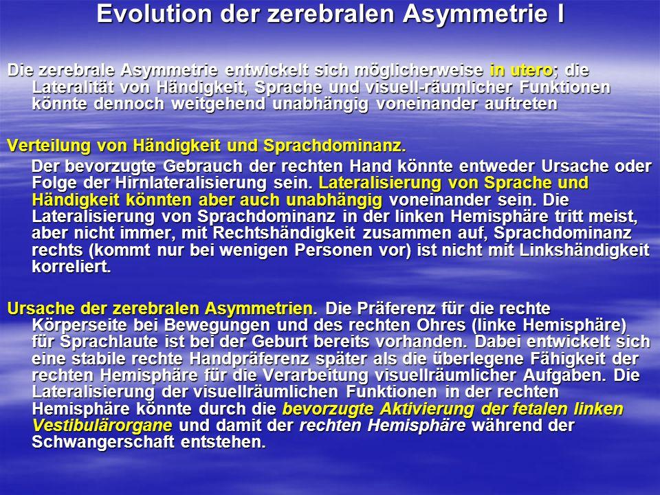 Evolution der zerebralen Asymmetrie II Die übliche Lage des Fetus mit der rechten Körper- und Gesichtsseite nach außen bewirkt nämlich, dass einerseits der linke Utrikulus (der bevorzugt in die rechte Hemisphäre projiziert) und andererseits das rechte Ohr (projiziert bevorzugt in die linke Hemisphäre) durch das Gehen bzw.