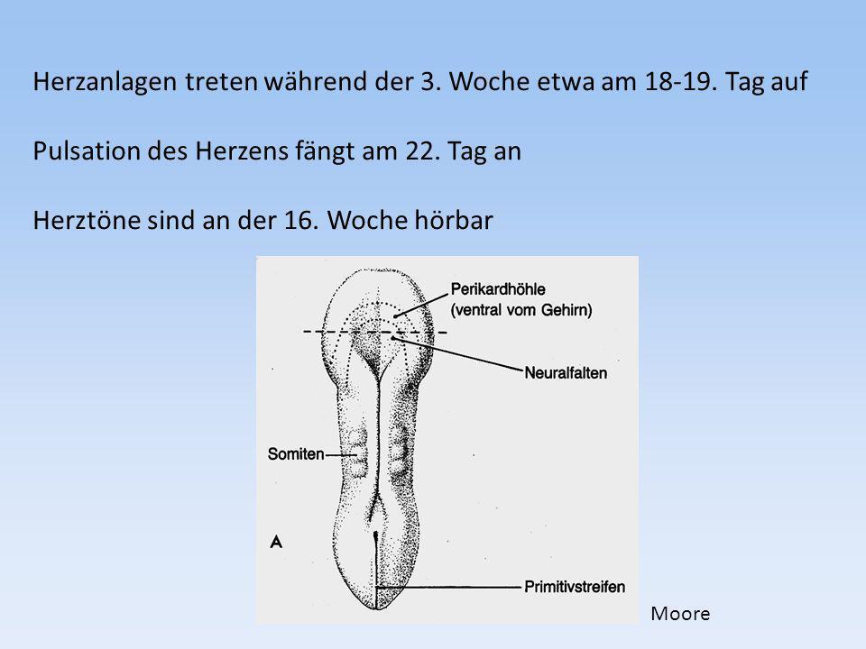 1.Intraembryonales Zölom 2.Somiten 3.Chorda dorsalis 4.Neuralrohr 5.Myocoel 6.Gononephrotom 7.Seitenplatten 8.Dottersack Szentágothai & Réthelyi