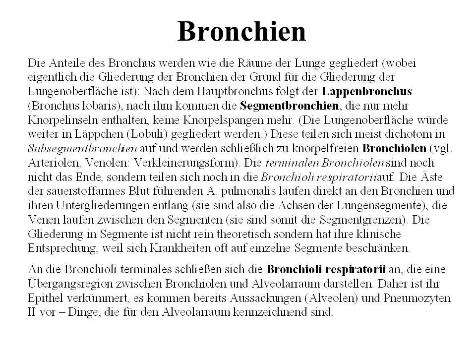 Bronchien