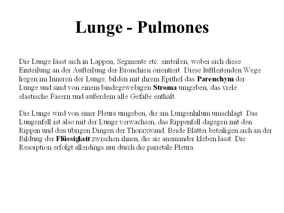 Lunge - Pulmones
